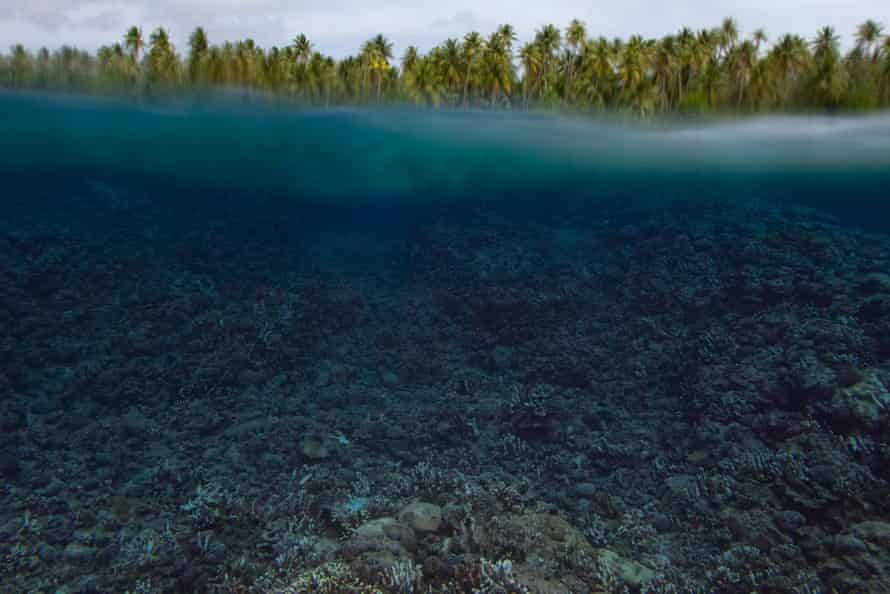 The Guardian found massive coral bleaching across atolls in the Marshall Islands in December 2014. After a brief cool period, reports now indicate the return of dangerously warm temperatures.