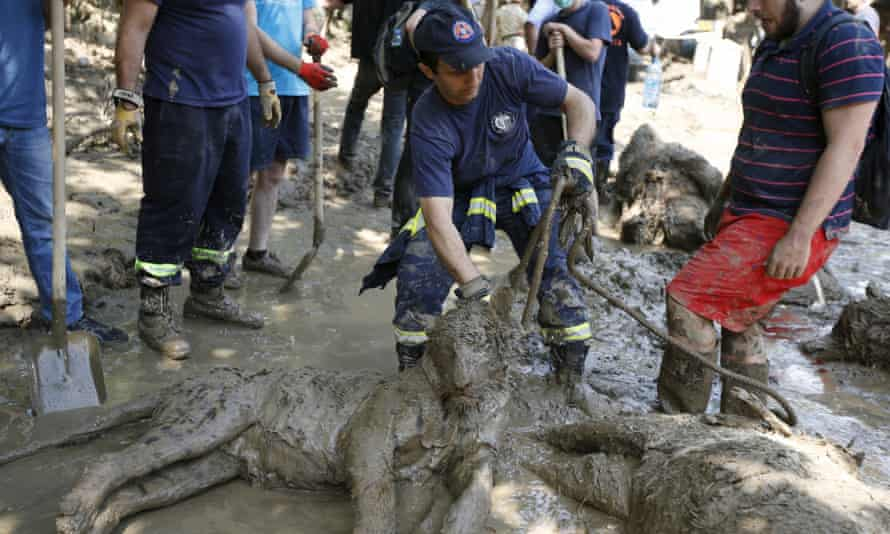Rescue workers drag away a tiger killed by flooding at Tbilisi zoo.