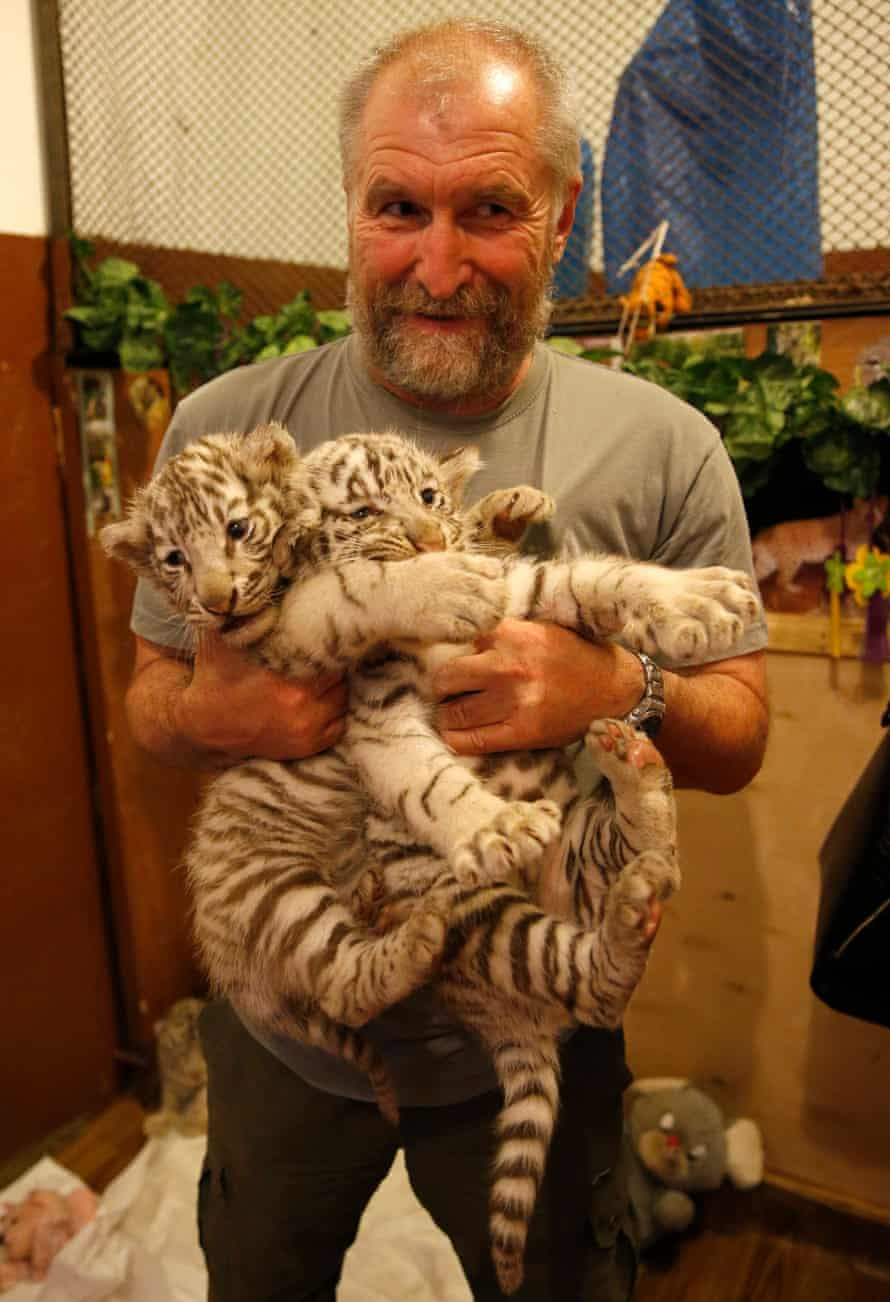 Tbilisi zoo director Zurab Gurielidze holds two tiger cubs at the zoo, before disaster struck.