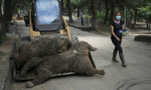 A keeper walks past dead bears at the zoo in Tbilisi.