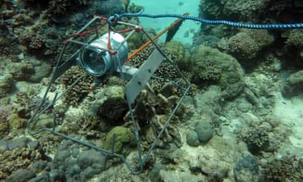 A baited remote underwater video.