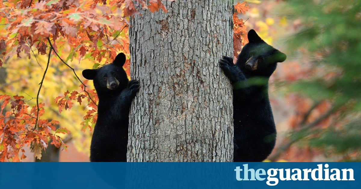 Hibernating bears could hold the key to long-distance space travel ...