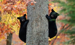 The biological process that protects black bears' bones during hibernation could help people with bone-related chronic illness and to protect astronauts on long space flights.