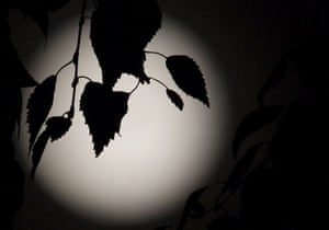 Leaves are silhouetted against the moon over north London.