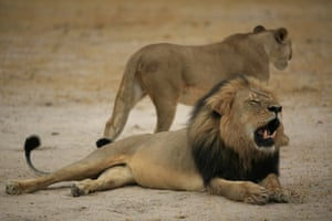 Cecil the lion in 2012.