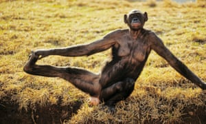 There's nothing like a morning stretch to help your mood, as this bonobo demonstrates.