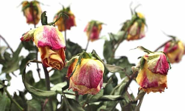 'People don't like to upset the person sending the flowers by complaining, but it's important you do, because you don't want your friend or relative wasting their money,' says Helen Dewdney