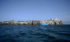 Seabirds sit on a cliff edge on the Inner Farne, which is part of the Farne Islands, off the Northumberland coast.