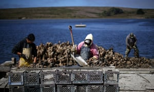 Drakes Bay Oyster Co. workers sort freshly harvested oysters in 2013 in Inverness, California.