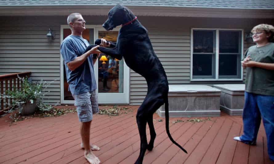 Tallest Dog Ever