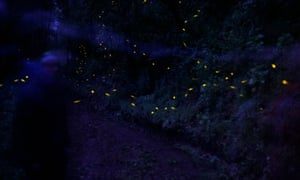 The fireflies of Tlaxcala.