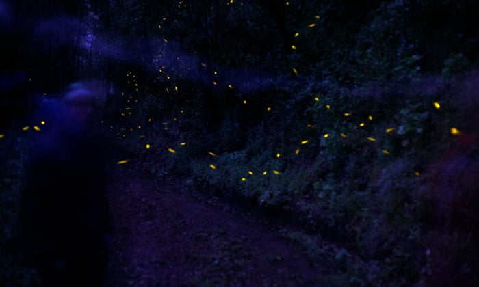 The alluring firefly: nature's lightning bug may hold key to medical