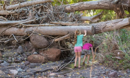 Two girls playing outdoors by tree stumps
