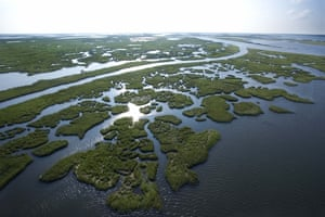 Aerial view of swamp in Louisiana.