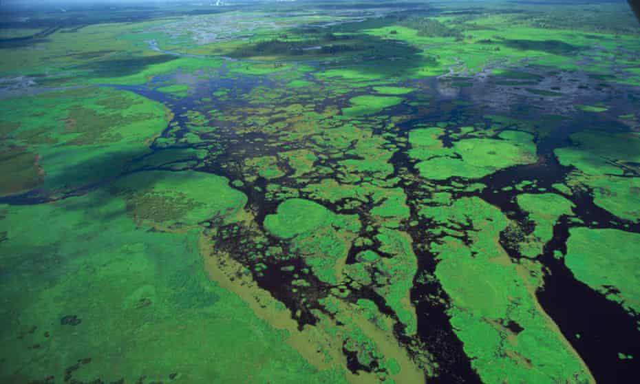 Lush swamp in Louisiana.