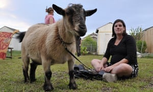 Chauncey the goat with Mizzy, the author's wife.