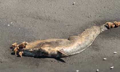 bears fin whale
