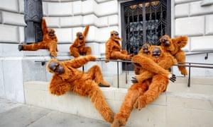 Greenpeace campaigners dressed in orangutan costumes