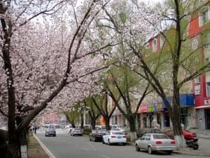 Jilin City blossom trees