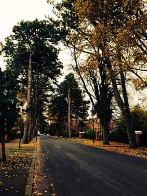 Trees on Cyprus Avenue