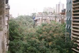 Trees in Mumbai