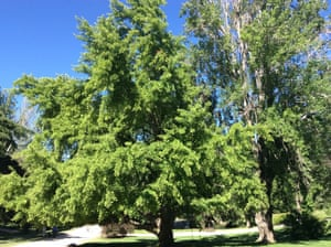 Tree in the Parque del Oeste in Madrid