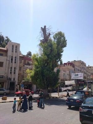Tree in Ajloun