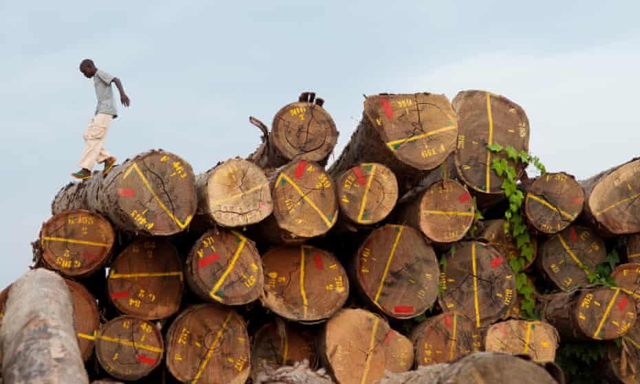 Not for sale … Gabon has banned the export of whole logs and is developing its own timber processing industry.