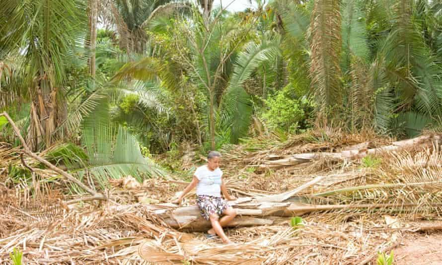 Eunice da Conceição Costa where babassu have been cut down in order to widen a road in Maranhao.