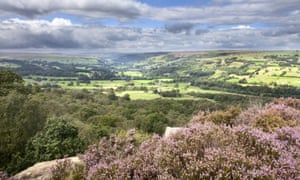 Purple pose … Nidderdale, a mix of heather moorland, rolling hills and pretty villages.