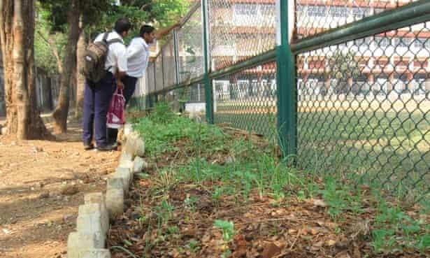 Garden beds at Don Bosco school in Mumbai, India