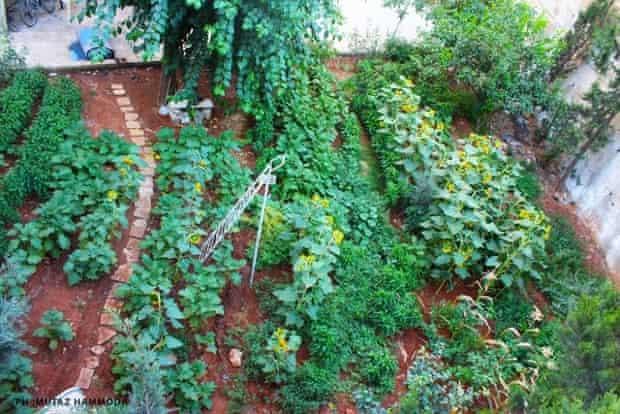 A community farm in Aleppo, Syria