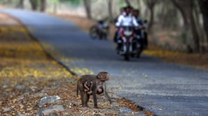 Animals are at risk of being run over on roads through forests.