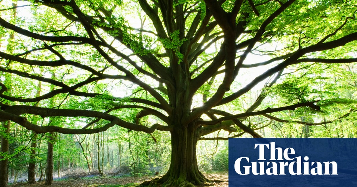 Are Plants Intelligent New Book Says Yes Environment The Guardian