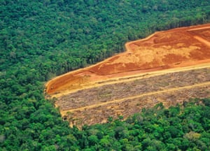 Deforestation in the Amazon. Forest destruction worldwide has pushed innumerable species into extinction, many of which we may never know.
