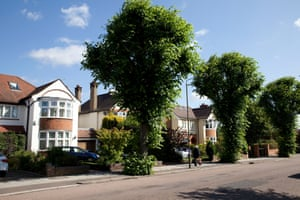 A tree-lined street in the London borough of Barnet.