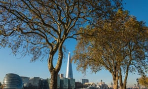 London plane trees on the north bank of the Thames. Mayor Boris Johnson has planted 20,000 urban trees in London in the last seven years.