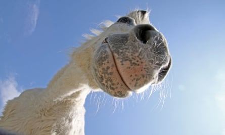 Can you tell what this horse is thinking? Thanks to EquiFACS we soon might.