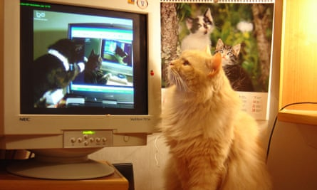 How Cats Took Over The Internet
