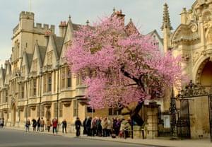 Blossom tree on high street