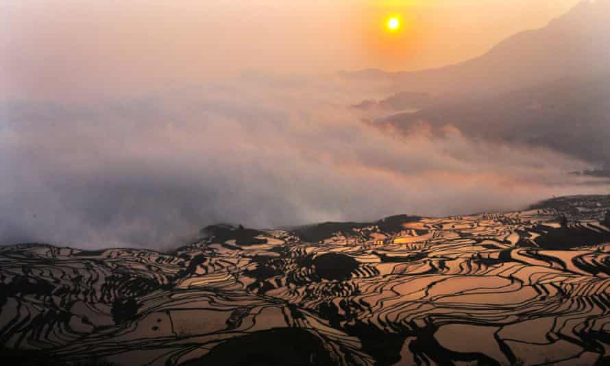 Paddy fields in China