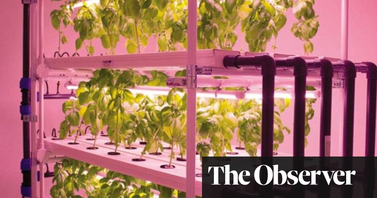 Future of food: how we grow | Technology | The Guardian
