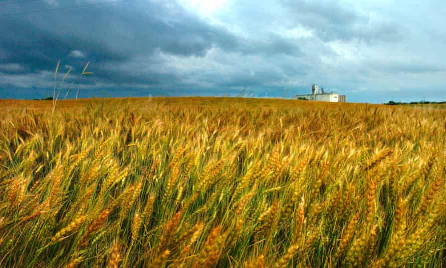 wheatfield with storm
