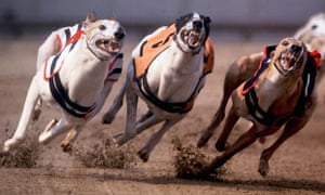 Greyhound racing in Hackney, June 1992
