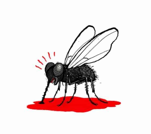 foldvari.fly