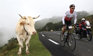 Haute Route Pyrenees Rider with cow