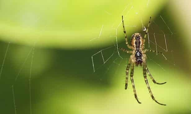A spider in the garden