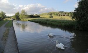 Swans at Skipton.