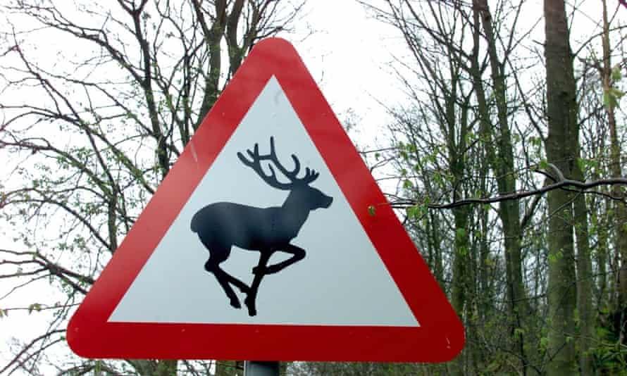 Deer crossing.