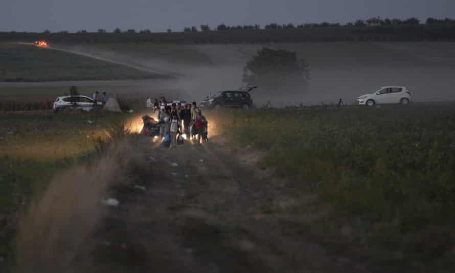 Migrants walk through cornfields to a border crossing point between Serbia and Croatia